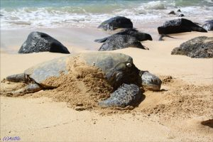 01 - Sea Turtles in Florida