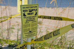 03 - Sea Turtles in Florida