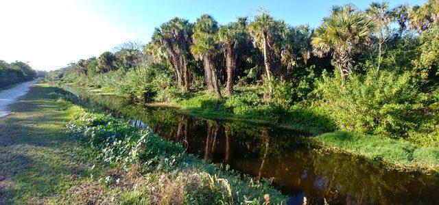 Trail on Alligator Creek Venice