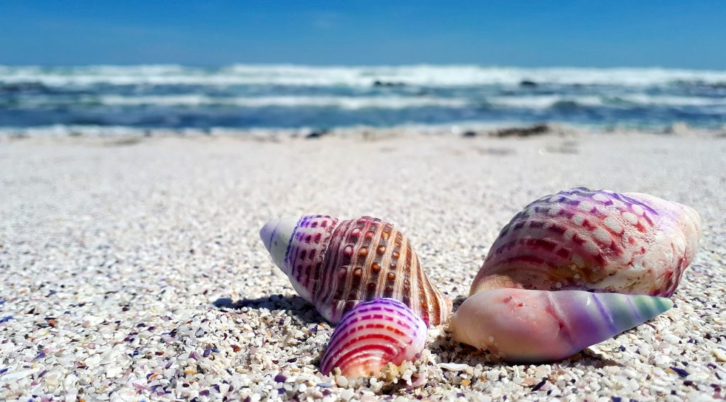 Shell Hunting in Venice
