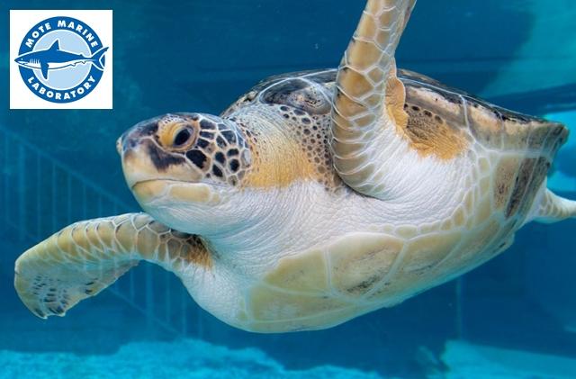 Mote Aquarium Sarasota