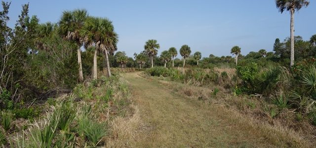 Lemon Bay Preserve